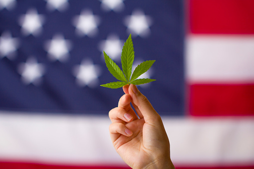A hand holding up a marijuana leaf with the American flag as a backdrop.